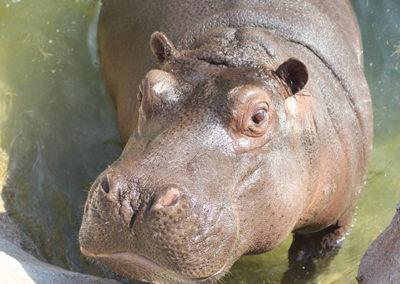 ZoomTorino-Hippo_Home