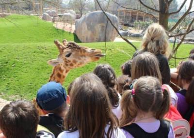 ZoomTorino-giraffa